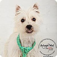 Adopt A Pet :: Mikey - Omaha, NE