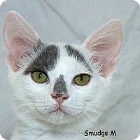 Adopt A Pet :: Smudge M - Sacramento, CA