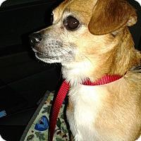 Adopt A Pet :: Gus - Salem, OR