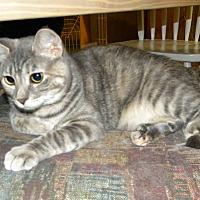 Adopt A Pet :: Penny - Bartlett, IL