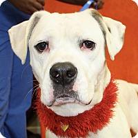 Ct Dog Adoption Agencies