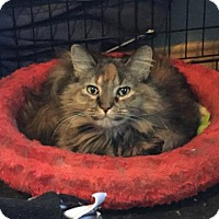 Adopt A Pet :: Minnie - Fort Collins, CO