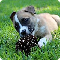 Adopt A Pet :: Axel - Groton, MA