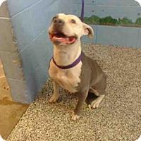 Adopt A Pet :: A495656 - San Bernardino, CA