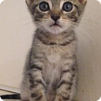Adopt A Pet :: Leonardo - Fullerton, CA
