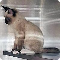 Adopt A Pet :: Davy - New York, NY