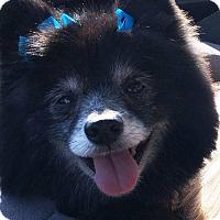 Adopt A Pet :: Maggie Mae - Norman, OK