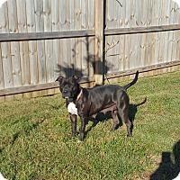 Adopt A Pet :: June Bug - Clarksville, TN