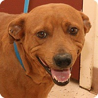 Adopt A Pet :: Sheldon - McDonough, GA