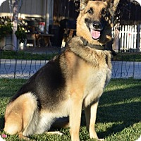 German Shepherd Dog Dog for adoption in Las Vegas, Nevada - Roxy