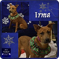 Adopt A Pet :: Irma - Washington, PA