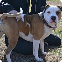 Adopt A Pet :: Deets - Cranston, RI