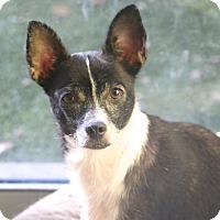 Adopt A Pet :: Zaza - Norwalk, CT