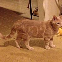 Adopt A Pet :: Gambit - Marietta, GA