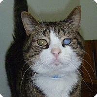 Adopt A Pet :: Lincoln - Hamburg, NY