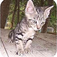 Adopt A Pet :: Watermint - Dallas, TX