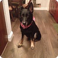Adopt A Pet :: Sarah - Pompano Beach, FL