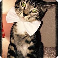 Adopt A Pet :: Romeo - Arlington/Ft Worth, TX