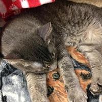 Adopt A Pet :: Nuni - Fresno, CA