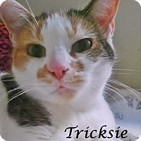 Adopt A Pet :: Tricksie - Ocean City, NJ