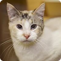 Adopt A Pet :: *Mango - Sioux Falls, SD