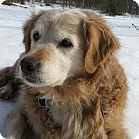 Adopt A Pet :: Ginger - Capon Bridge, WV