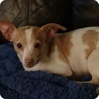 Adopt A Pet :: Britney - San Diego, CA