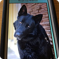 Adopt A Pet :: WYATT VON WILFRI ED - Los Angeles, CA