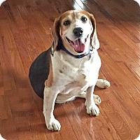 Adopt A Pet :: Thomas - Knoxville, TN