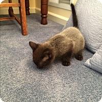 Adopt A Pet :: KITTENS - Hamilton, NJ