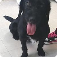 Adopt A Pet :: Mack - Avon, NY