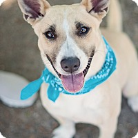 Adopt A Pet :: Steve - Kingwood, TX