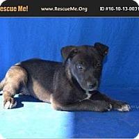 Adopt A Pet :: Darny - Denver, CO