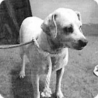 Terrier (Unknown Type, Small) Mix Dog for adoption in Spokane, Washington - Snow Yi