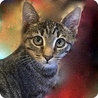 Adopt A Pet :: Lila - Long Beach, NY