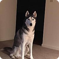 Adopt A Pet :: Glacier - Xenia, OH