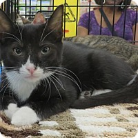 Adopt A Pet :: .Pooh Bear - Ellicott City, MD