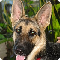 German Shepherd Dog Dog for adoption in Riverview, Florida - Betsy