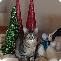 Adopt A Pet :: Leon - Antioch, CA