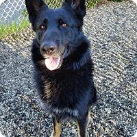 Adopt A Pet :: Henry - Lompoc, CA