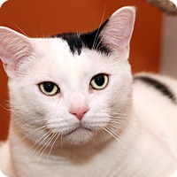 Adopt A Pet :: FRANKLIN - Royal Oak, MI
