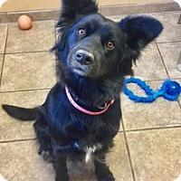 Adopt A Pet :: Magenta  5669     10 - Joplin, MO