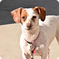 Adopt A Pet :: Rose - Meridian, ID