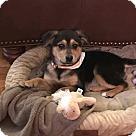 Adopt A Pet :: Dovey (DC)