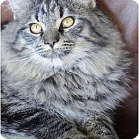 Adopt A Pet :: Yukon - Columbus, OH