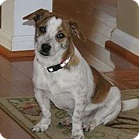 Adopt A Pet :: Buddy - Midway, KY