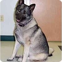 Adopt A Pet :: Lady Madonna - Belleville, MI