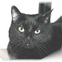 Adopt A Pet :: Spooky - Montgomery, IL