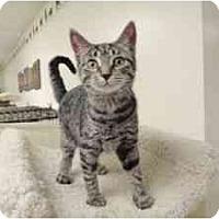 Adopt A Pet :: Bunny - Milwaukee, WI