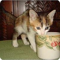 Adopt A Pet :: Georgette - Orlando, FL
